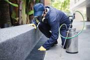 Pest Control Dandenong| Rodent Control